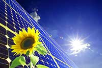 Sunflower and Solar Panels representing sustainability